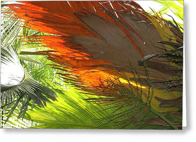 Greeting Card featuring the photograph Palms by Debbie Cundy