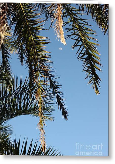 Palms In The Wind Greeting Card by AR Annahita