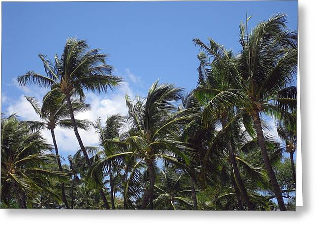Palms In The Wind Greeting Card