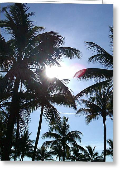 Palms Greeting Card by J Anthony