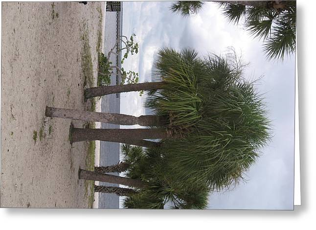 Palms On The Beach Greeting Card