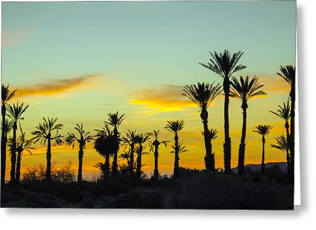 Palm Trees At Dawn Greeting Card