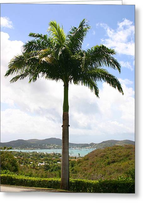 Palmtree In The Carribean Greeting Card