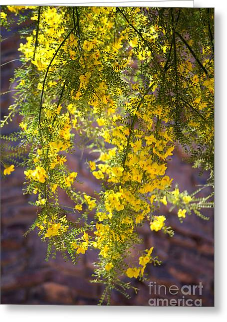 Palo Verde Blossoms Greeting Card