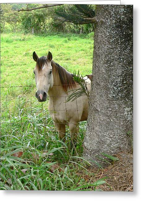 Palomino Horse Greeting Card