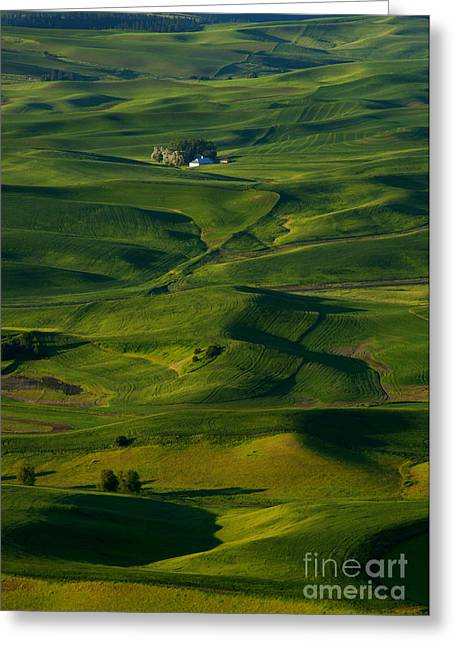 Palouse Green Greeting Card