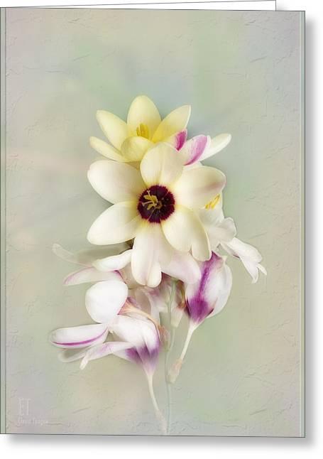 Pamela Greeting Card by Elaine Teague
