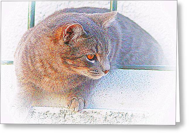 Pancho On The Roof Terrace Greeting Card
