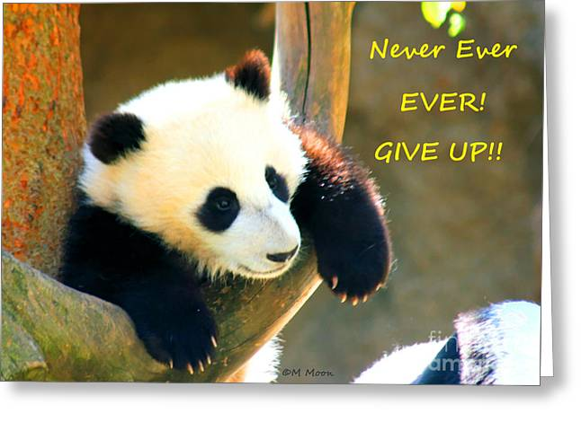 Panda Baby Bear Never Ever Ever Give Up Greeting Card