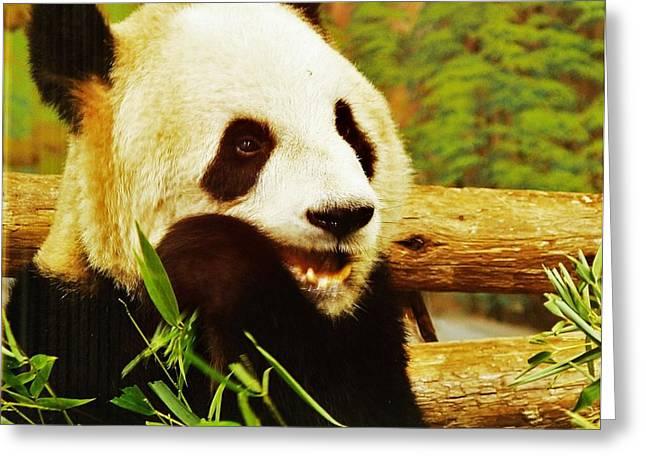 Panda Bear Greeting Card by Al Fritz