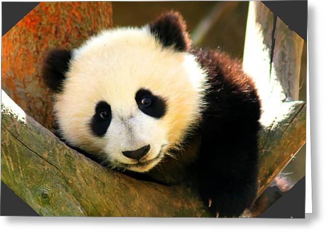 Panda Bear Baby Love Greeting Card