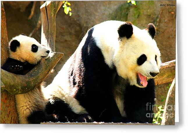 Panda Bear Mommy Talk Greeting Card by Tap On Photo