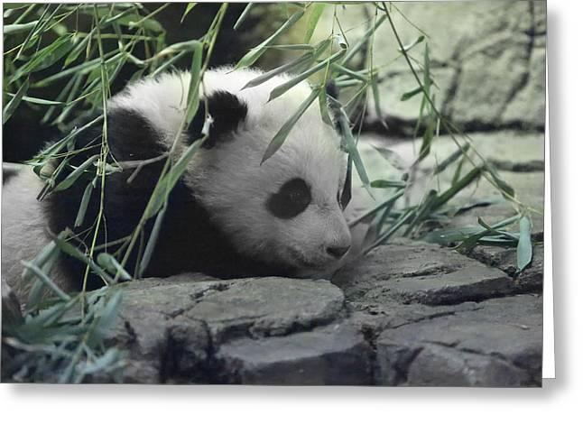 Panda Cub Bao Bao Greeting Card by Jack Nevitt