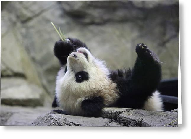 Panda Cub Greeting Card