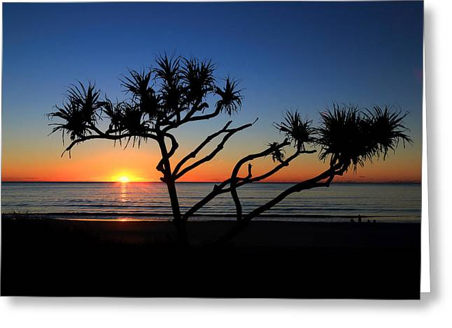 Pandanus Sunrise Greeting Card
