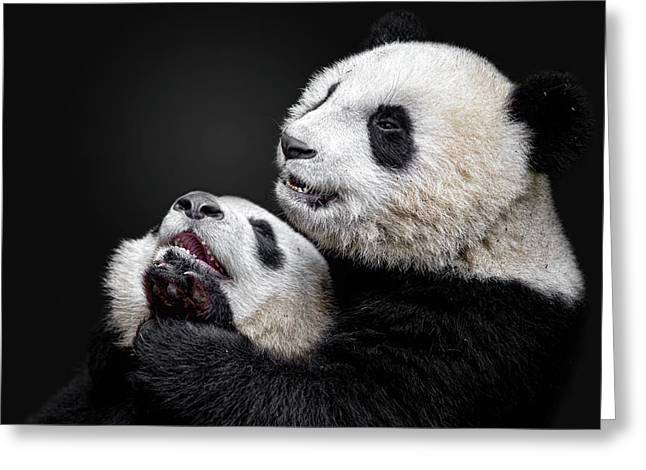 Pandas Greeting Card