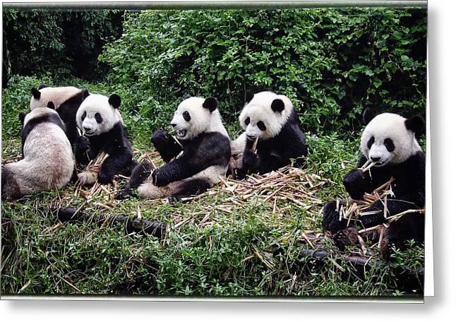 Pandas In China Greeting Card by Joan Carroll