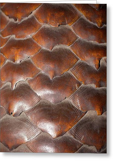 Pangolin Scales Greeting Card by Paul D Stewart