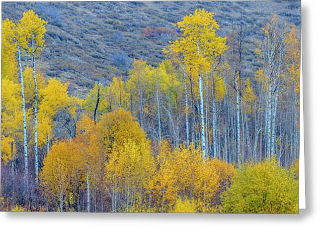 Panorama Aspens Winthrop Western Greeting Card by Tom Norring