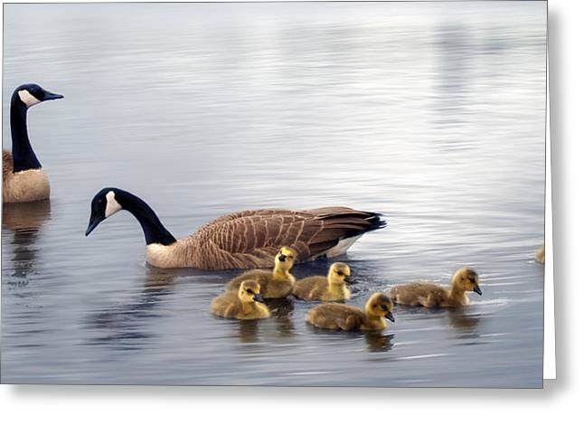 Panoramic Goose Family Outing Greeting Card