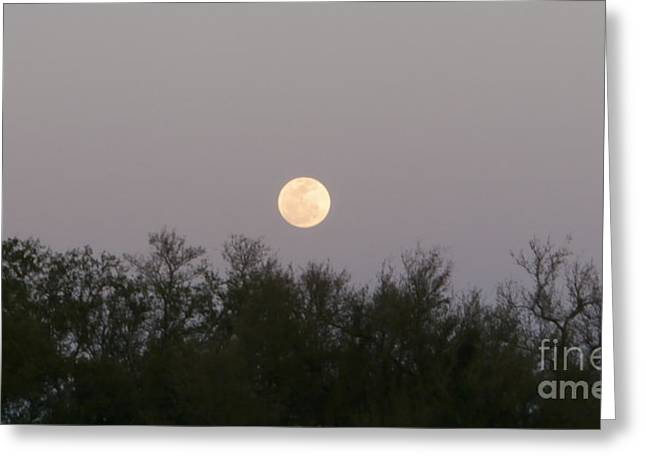 Panoramic New Orleans Moon Rising Greeting Card by Joseph Baril