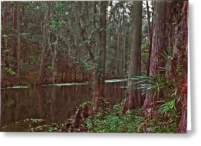 Panoramic Of Shingle Creek. Greeting Card