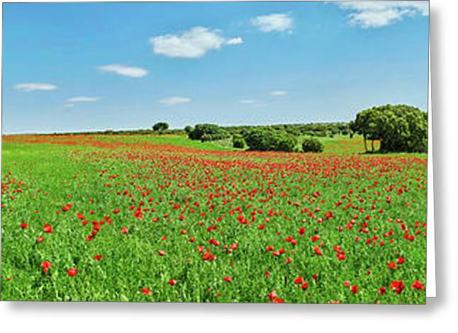 Panoramic View Of Poppy Flowers Field Greeting Card