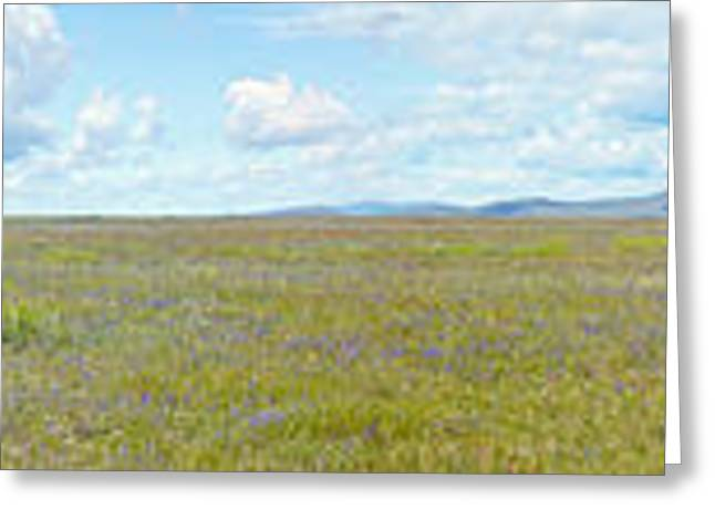 Panoramic View Of Spring Grasslands Greeting Card by Panoramic Images