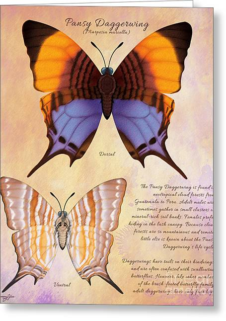 Pansy Daggerwing Butterfly Greeting Card by Tammy Yee