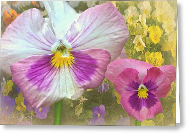 Pansy Duo Greeting Card by Sandi OReilly