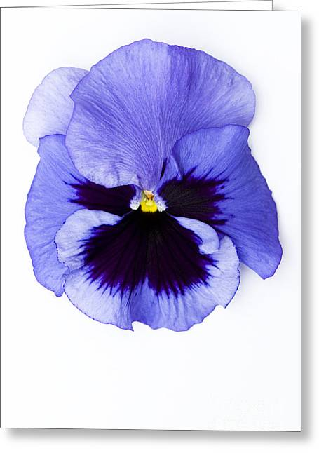 Pansy Face Greeting Card by Anne Gilbert