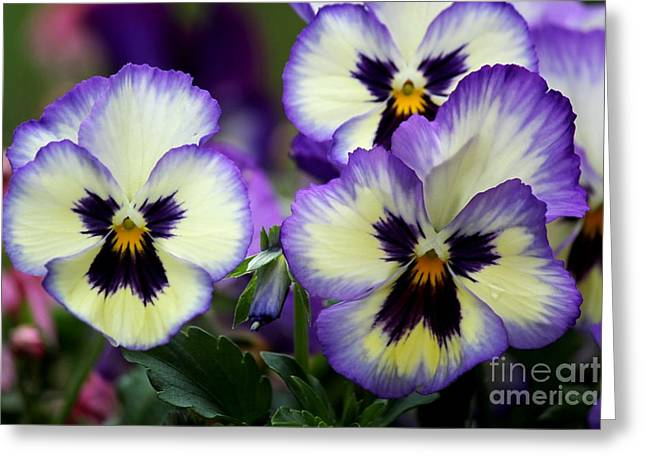 Pansy Faces Greeting Card by Theresa Willingham