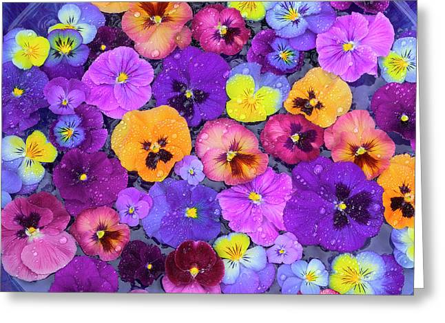 Pansy Flowers Floating In Bird Bath Greeting Card