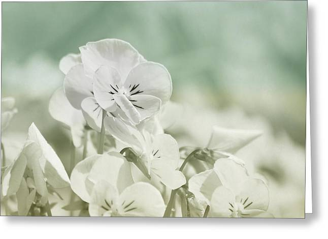 Pansy Flowers Greeting Card by Kim Hojnacki