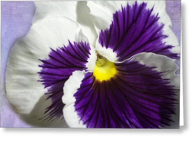 Pansy Greeting Card by Jeanne Hoadley