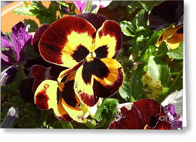 Pansy Time Greeting Card by Julie Koretz