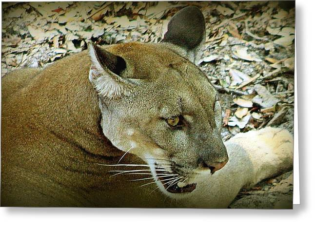 Greeting Card featuring the photograph Panther by Debra Forand