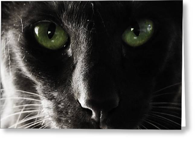 Panther Eyes Greeting Card by Michael Canning