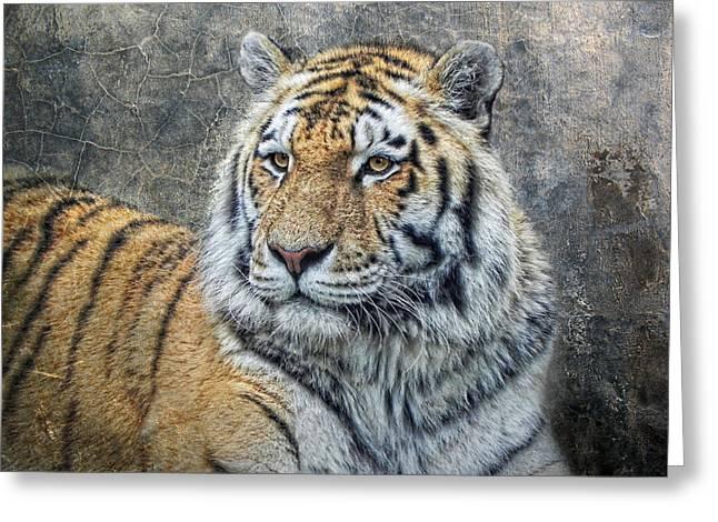 Panthera Tigris Greeting Card by Joachim G Pinkawa