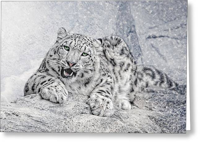 Panthera Uncia Greeting Card