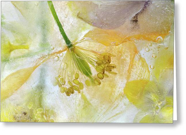 Papaver Ice Greeting Card by Mandy Disher