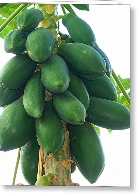 Papaya Tree With Green Papayas Greeting Card by Yali Shi