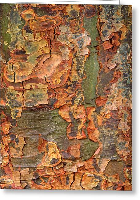 Paper-bark Maple Abstract Greeting Card by Nigel Downer