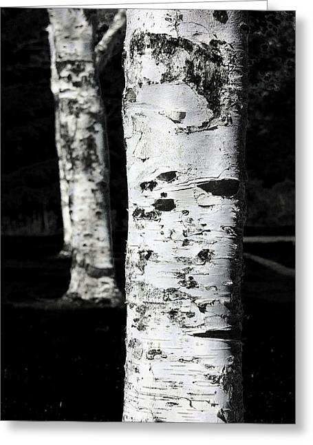 Black And White Greeting Card featuring the photograph Paper Birch by Aaron Berg