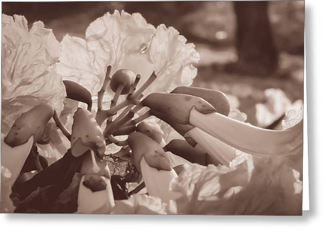 Paper Flowers - Sepia  Greeting Card