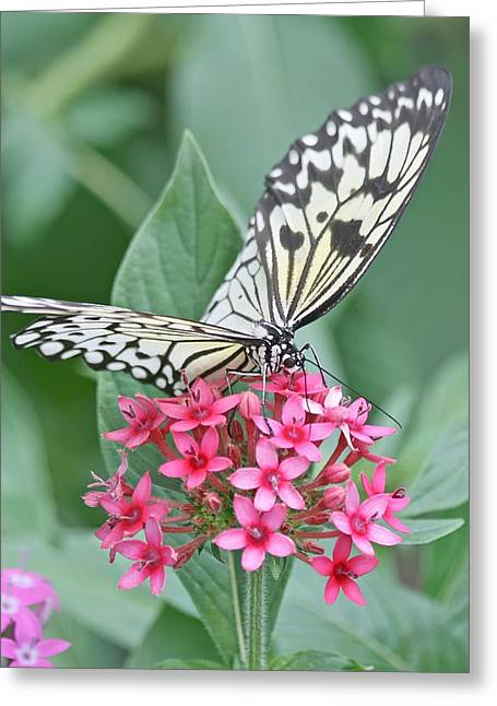 Paper Kite Butterfly - 2 Greeting Card