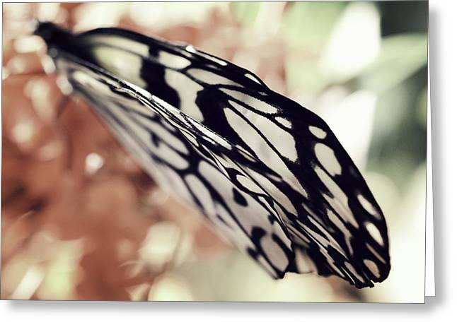Paper Kite Butterfly Wings Greeting Card