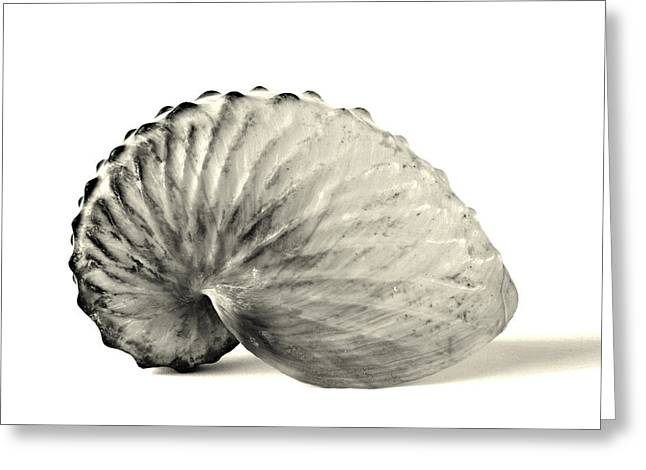 Paper Nautilus Shell Greeting Card