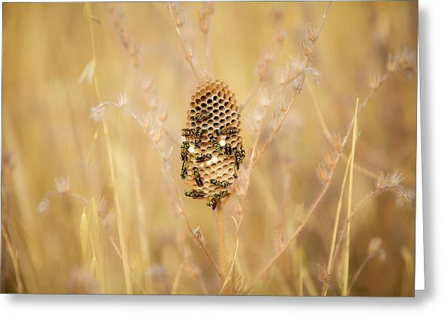 Paper Wasp Nest Greeting Card by Photostock-israel