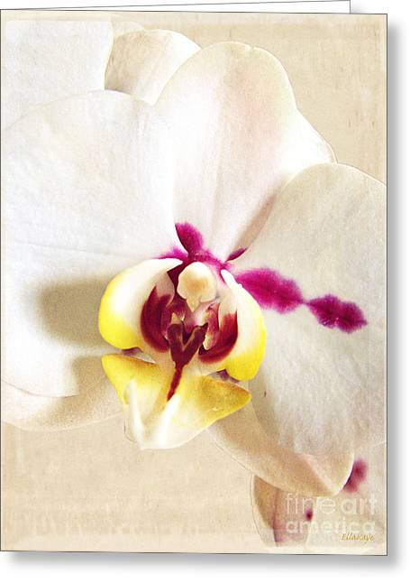 Paper White Orchid Greeting Card by Ella Kaye Dickey